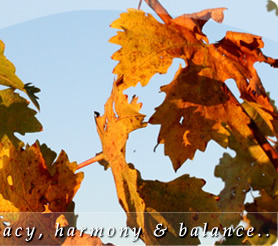 Delicacy, harmont and balance